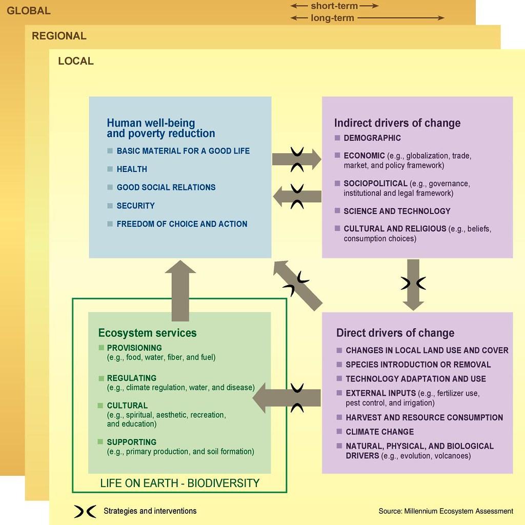 Millennium Ecosystem Assessment Conceptual Framework