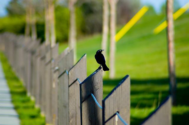 Photo:Blackbird By:thorinside
