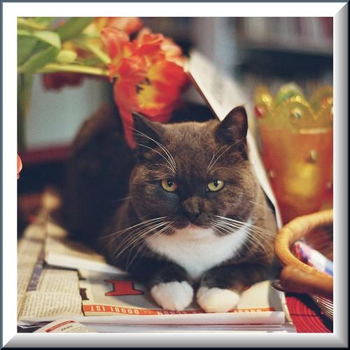 Strike Cat =^..^=