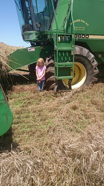 Emma: Triticale and Mud