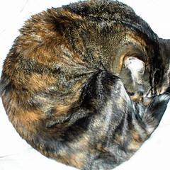 Ball of Zellouisa II