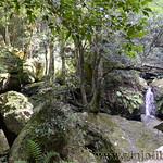 Viajefilos en Australia. Blue Mountains 030