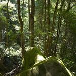 Viajefilos en Australia. Blue Mountains 013