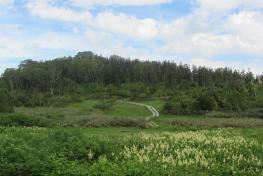 【長野。小谷  遊】栂池自然園,挑戰極限的自然園散策