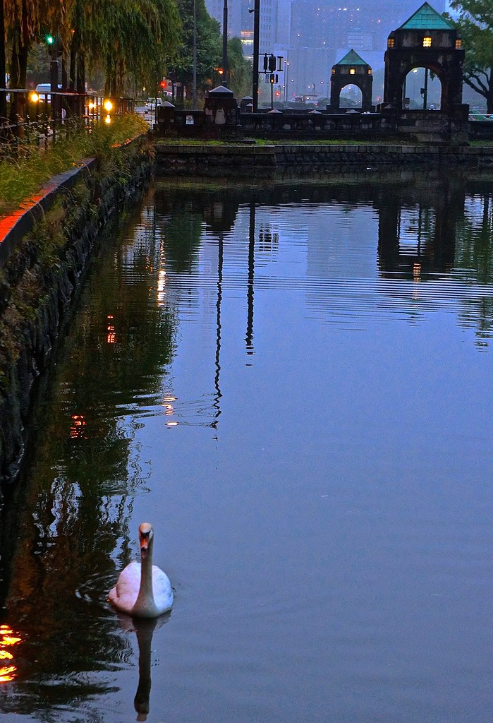 Swan in the moat surrounding the Imperial Palace