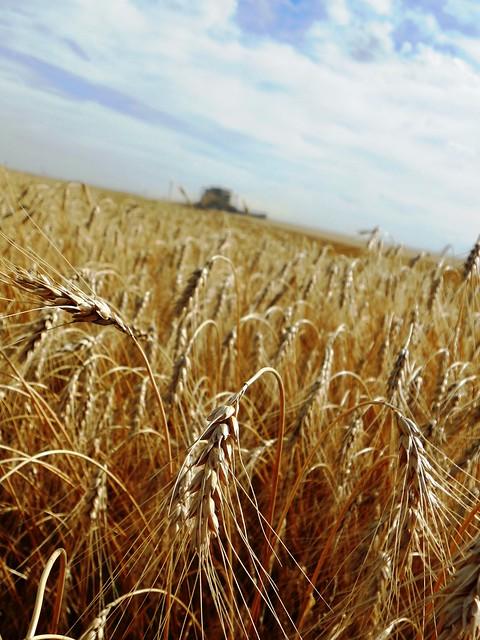 Heat of harvest
