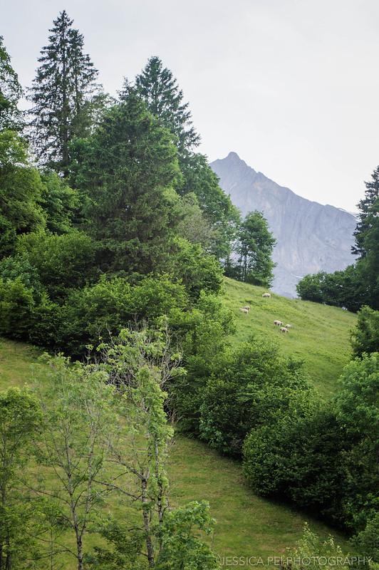 Sheep Mountain Engelberg Switzerland