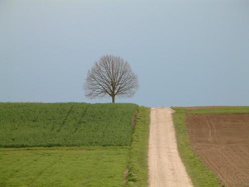Tree por Adnan Yahya