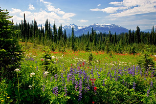 Mt. Revelstoke Nat. Park: Meadows in the Sky
