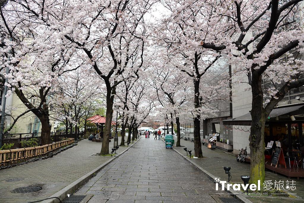 京都赏樱景点 祇园白川 (22)