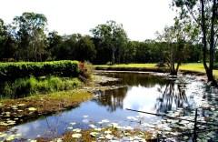 Pond of silence