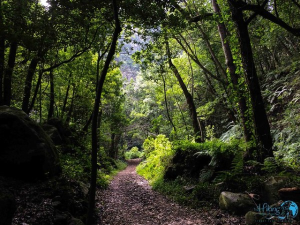 La Palma Die schönsten Wanderungen Cubo de la Galga