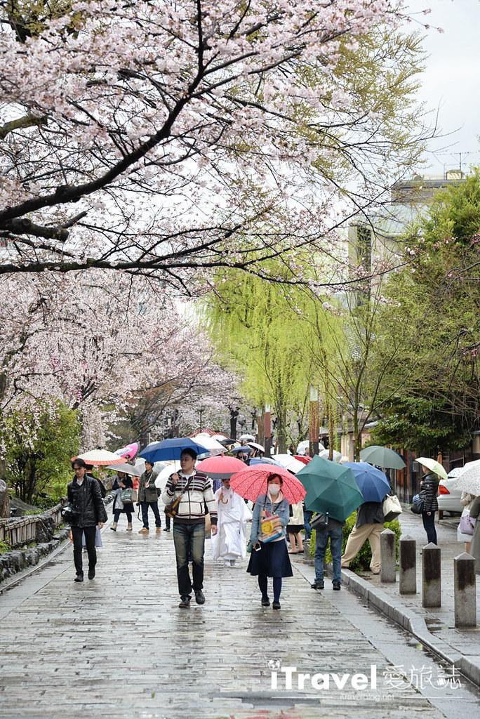 京都赏樱景点 祇园白川 (35)