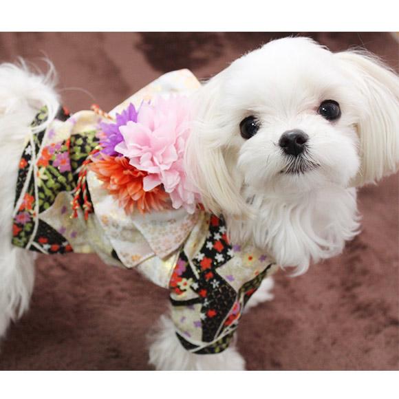 Pet Dog in Kimono!