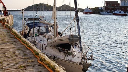 Fryd har funnet seg tilrette ved kaia til Norway Seafood