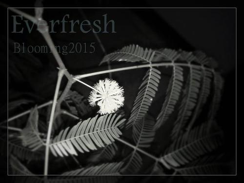 everflesh_bloom2015_eye