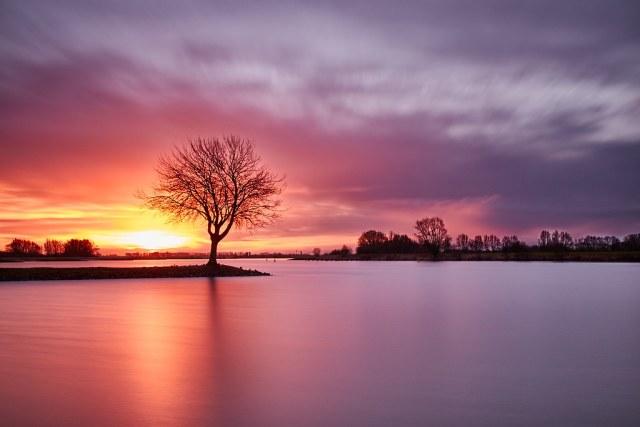 Tree at the river Lek 2