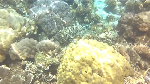 Una de corales en el Archipiélago Bacuit