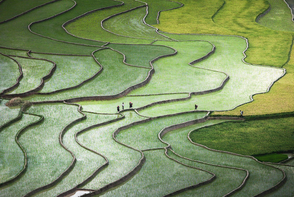 Terrace paddies in North Vietnam [Shortlisted in National Geographic Photo Contest 2015]