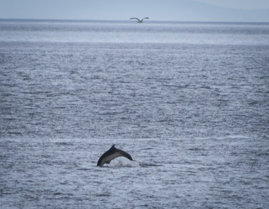 Dolphin Jumping!