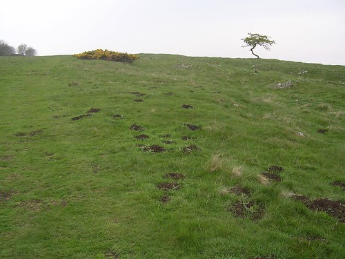 South of the wall, near the site of Turret 29b