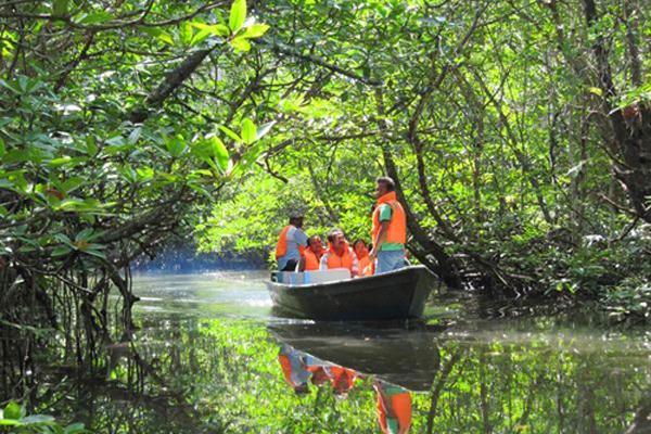 Bintan Discovery Mangrove_02