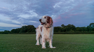 Welsh_Springer_Lightroom