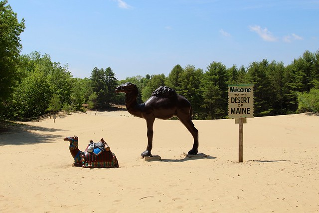 Camel in Maine state! No, it's just sculpture