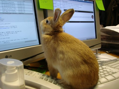 user reading web page
