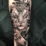 For Andy. Done at Far Beyond, Luton. Thankyou mate! #tiger #silverbackink #blackandgreytattoo