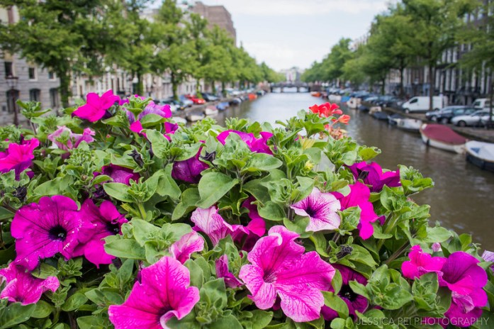 Amsterdam Flowers Canals