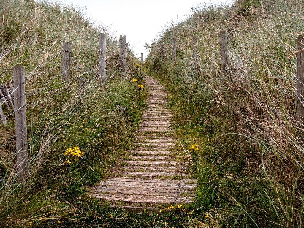 wooden_path_7091