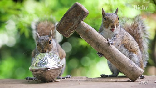 Capturing the secret lives of squirrels