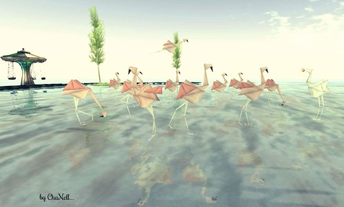 Les Flamand Roses..