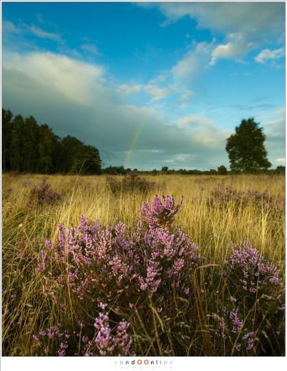 Een eenzaam heidestruikje op de voorgrond met de regenboog klein en onopvallend op de achtergrond. (17mm - f/2,8)