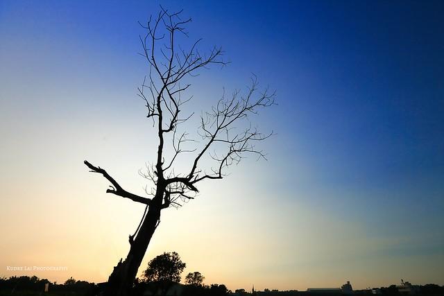 秋日寂寥的天空(lonely tree)