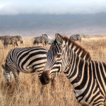 Our Tanzania Safari Part 3 – Ngorongoro Conservation Area