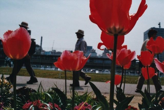 Yokohama scene
