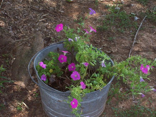 flowers in a bucket