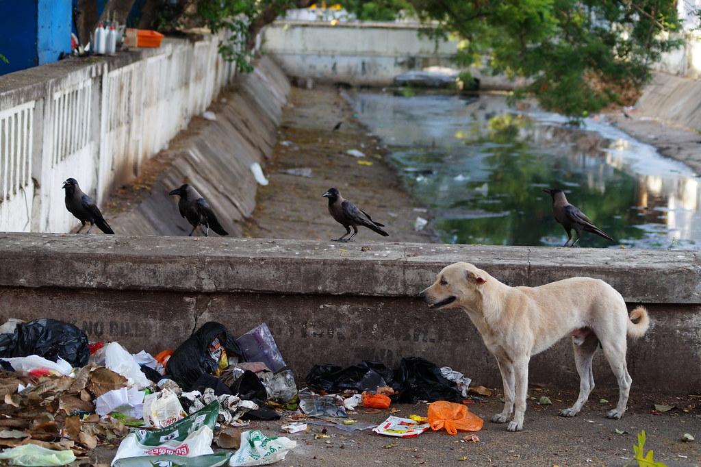Indien India Pondicherry Puducherry Blog (39)