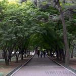 04 Corea del Sur, Gyeongju Tumulos 0001
