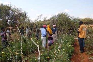 Tengeru 2010 – a new tomato variety bred and introduced by AVRDC and HORTI-Tengeru was well-received by farmers and consumers enjoy its big fruits. Farmers in the demonstration plots observing the new tomato variety.