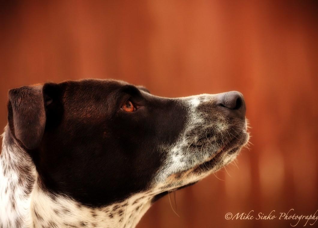 Imagen gratis de un perro