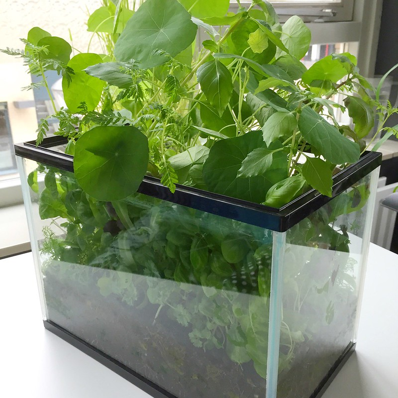 How to turn an old fish tank into an indoor herb garden | Lia Belle