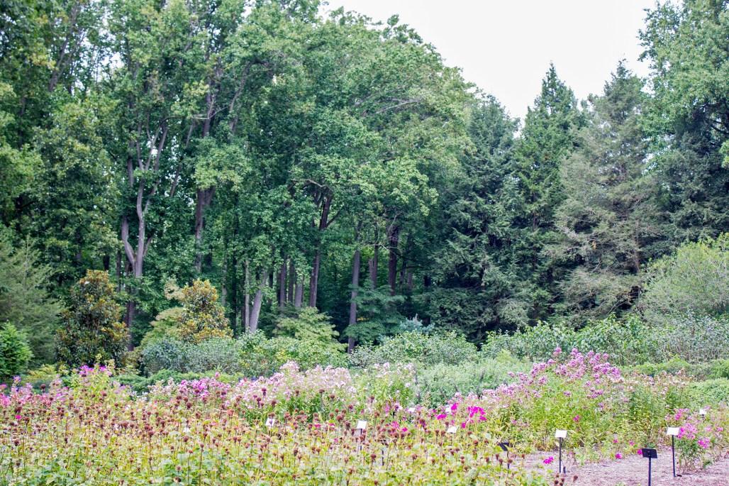 mt-cuba-gardens-delaware-flowers-trees