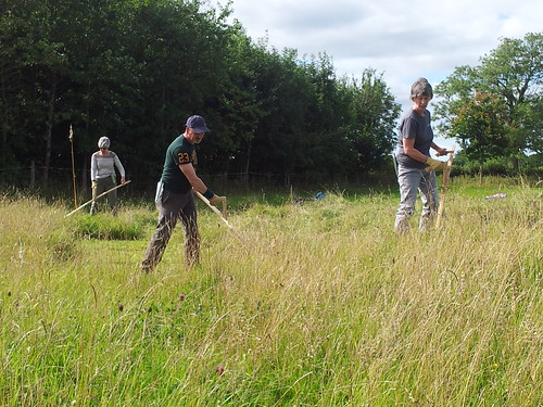 Scything the field