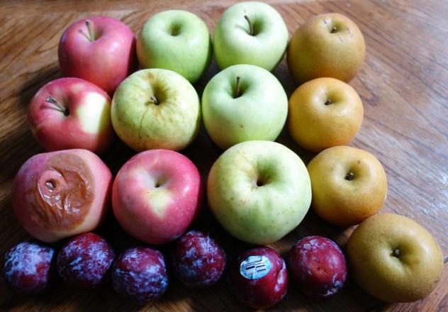 Homestead Creamery Week 12 Fruit Delivery