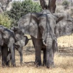 Our Tanzania Safari Part 1 – Tarangire National Park