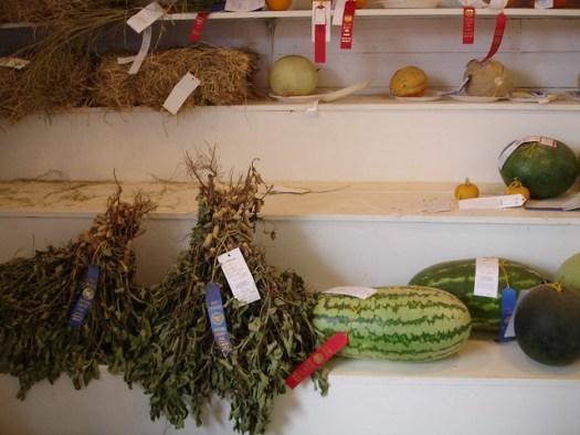 4-H Exhibit - Peanuts, Watermelon at Neshoba County Fair