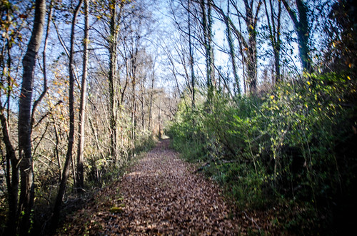 Pacolet River Trail-039